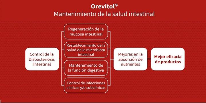 mantenimiento-salud-intestinal.jpg