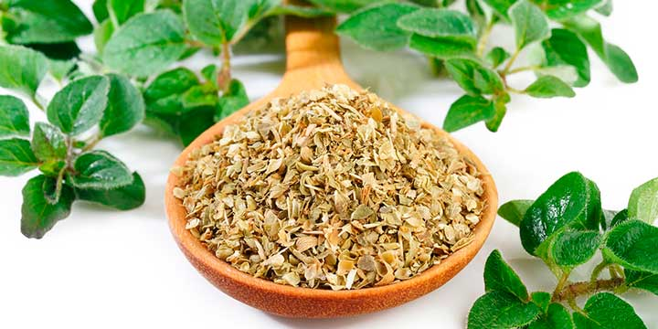 oregano-alimentacion-animal-ckm.jpg