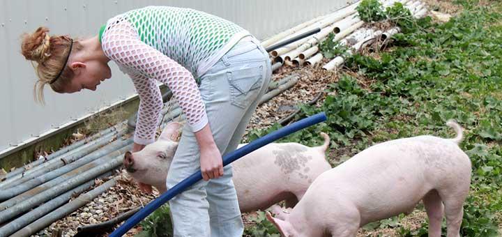 crianza-de-cerdos-consejos-1