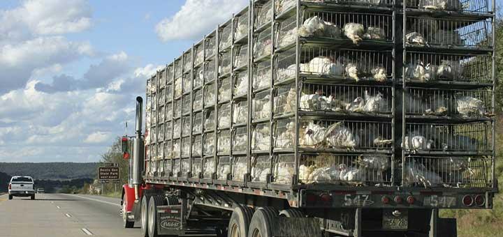bioseguridad-control-transporte