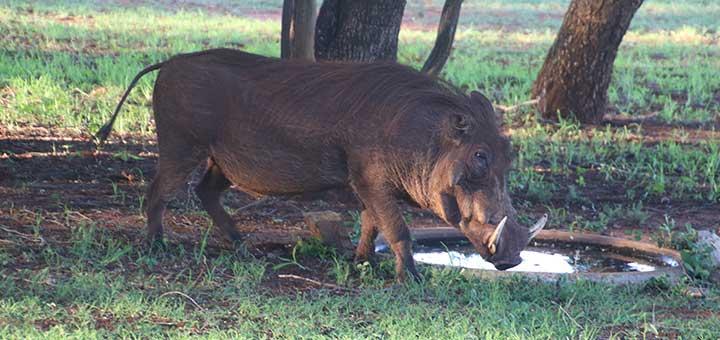 crianza-cerdos-nutricion-salud.jpg