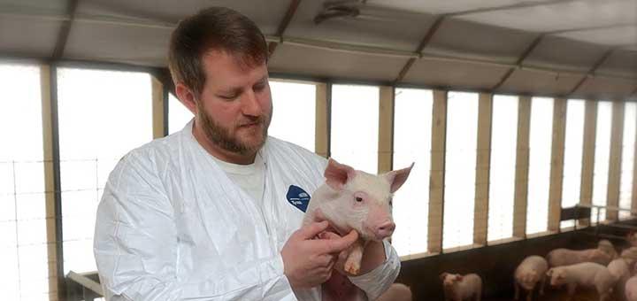 5 preguntas sobre enfermedades entéricas en cerdos