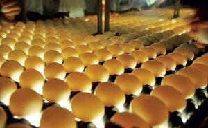 Determinar la edad de los huevos
