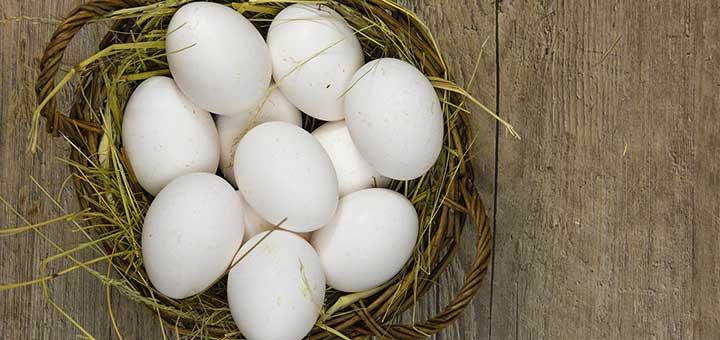 Razones que afectan la producción de huevos en aves de corral