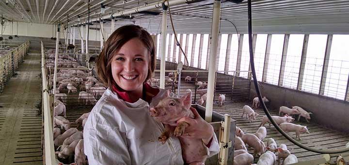 veterinario-cerdo