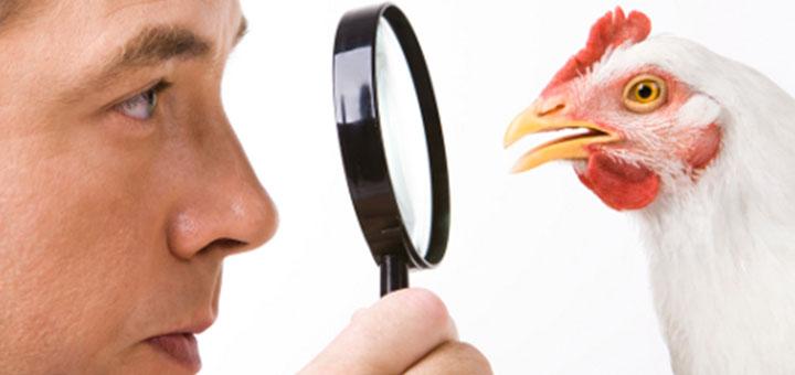 vigilancia-gripe-aviar-0.jpg