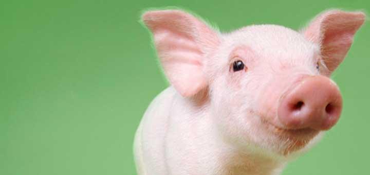 higado-cerdo.jpg