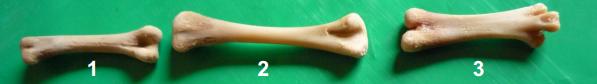 Efecto-suplementación-aceite-esencial-orégano-mineralización-ósea-integridad-esquelética-pollos-carne-3.png