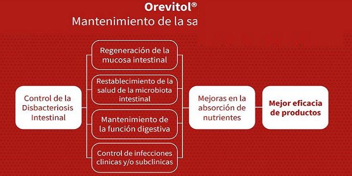 orevitol-mantenimiento-salud-intestinal.jpg