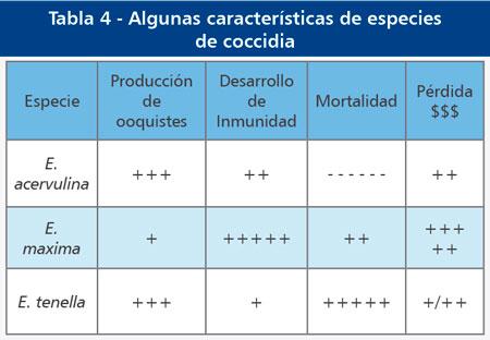caracteristicas-especies-coccidia.jpg