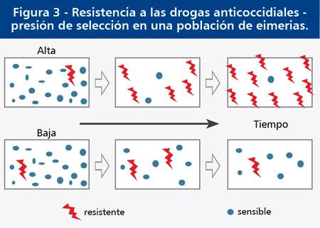 resistencia-drogas-anticoccidiales.jpg