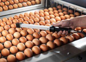 ovoscopia-huevos-aves-corral-2-300x216